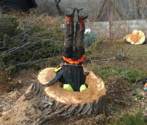 tree removal staten island, ny