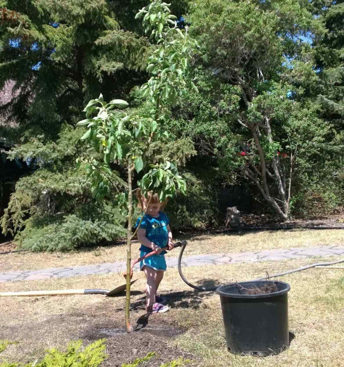 professional tree planting staten island