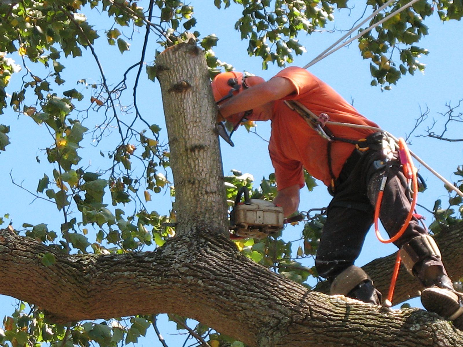 tree care staten island